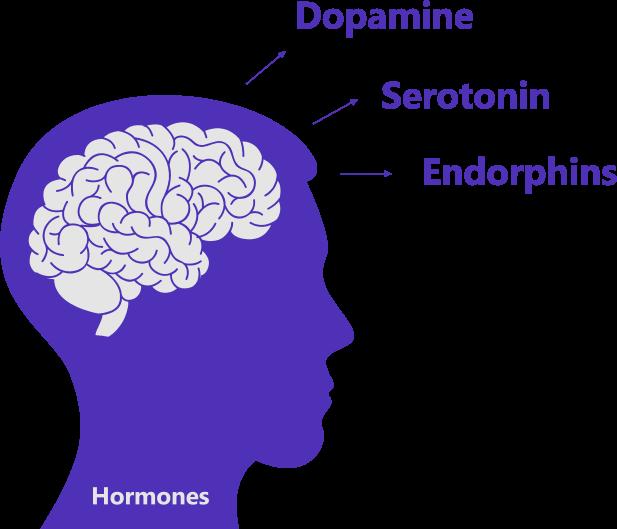 Brain Hormone Infographics - Dopamine - Serotonin - Endorphins